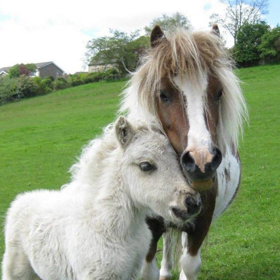 Evie and Rupert